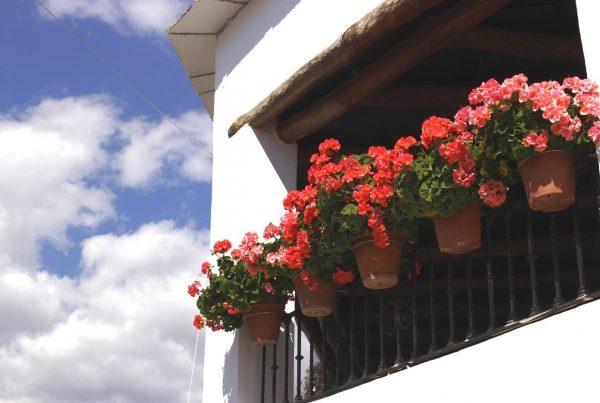 macetas en las ventanas de una casa en la Alpujarra