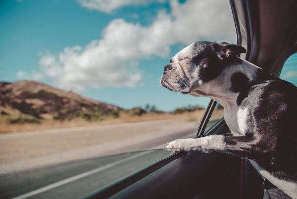 Consejos para viajar con mascotas